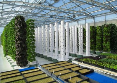 tg-greenhouse-2