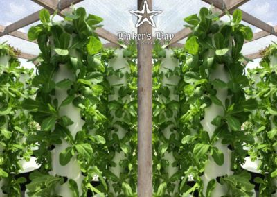 "Welcome to the ""living produce"" aeroponic farm."