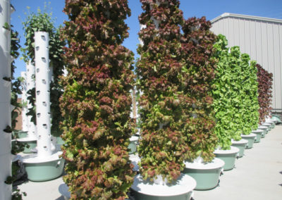 outdoor-aeroponic-tower-farm-10