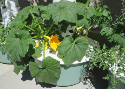 outdoor-aeroponic-tower-farm-11