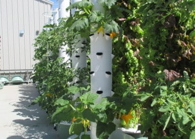 outdoor-aeroponic-tower-farm-12