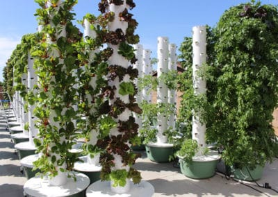 outdoor-aeroponic-tower-farm-2