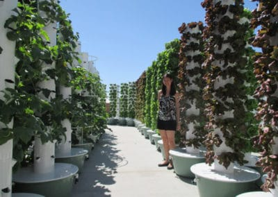 outdoor-aeroponic-tower-farm-3