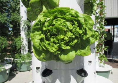 outdoor-aeroponic-tower-farm-4