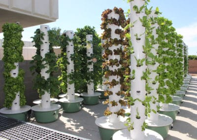 outdoor-aeroponic-tower-farm