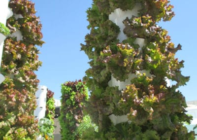 outdoor-aeroponic-tower-farm-5