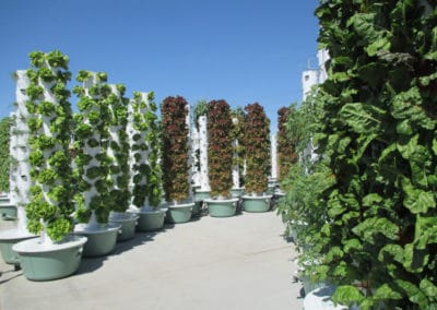 outdoor-aeroponic-tower-farm-9