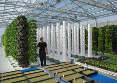 tower-garden-aeroponic-seedlings-12