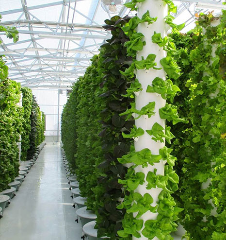 aeroponic workshops - Tower Garden