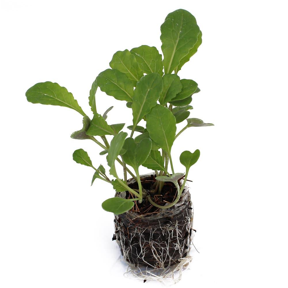 Coco Coir Seedlings for Tower Garden | Coco Coir Grow Medium